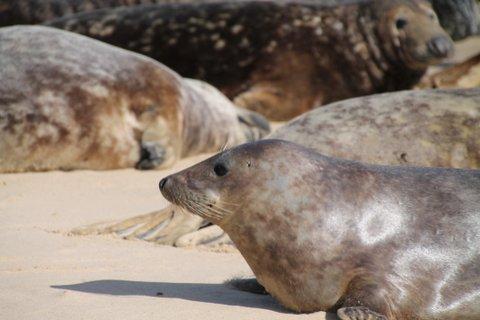 2015.03.27 SWAN 65 - Seals
